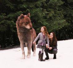 Breaking Dawn part 2~ Bella, Renesmee and Jacob