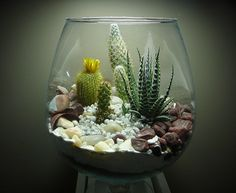 12 Terrarium Ideas for Home Decor | Ultimate Home Ideas