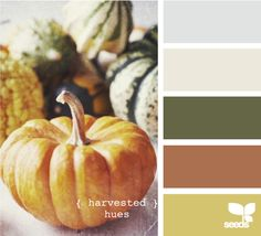 harvested hues~golden for living room, green for family room/kitchen and rust color for mud room.