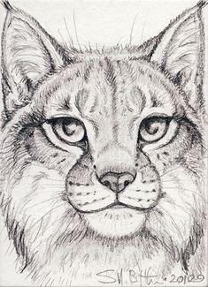 ACEO - Lynx by synnabar