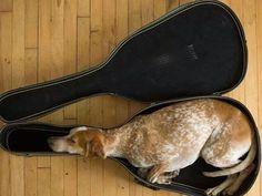 Humor: Gatos que se atascan en los lugares más impensables - Taringa!
