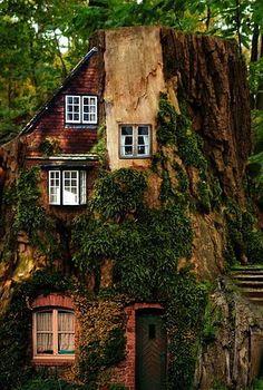 Oooh, tree house!