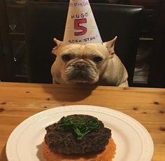Joyeux anniversaire  Hugo  #luchiachia #happybirthday with Beef #burger  Sweet Potato and Sweet Baby Broccoli. He is very hungry  #luchiachia #luchiacookbook #happy #chef #chefconsultant #chefsofinstagram #frenchie #frenchbulldog #foodiegram #foodblog #foodblogger #amazing #beautiful #healthyfood #healthyeating #homemade #burger #delicious #yummy #siliconvalley #bayarea #sanfrancisco #california