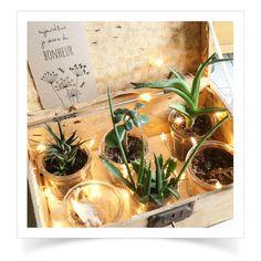 Guirlande étoile lumineuse Terrarium, Home Decor, Wooden Chest, Cherry, Garland, Terrariums, Decoration Home, Room Decor, Home Interior Design