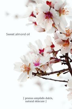Sweet almond oil is so often overlooked for its amazing all-round benefits in natural skincare. It's far more than a mere carrier oil. I love it for its versatility and unassuming role as a base in many natural skincare lotions and potions. Soothing and full of beneficial fatty acids  - oleic and linoleic - that bring moisturizing benefits to our skin.