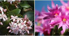 Una selección de plantas de interior preciosa para todos los gustos y apta para que los más pequeños de la familia o nuestras mascotas no corran ningún riesgo.