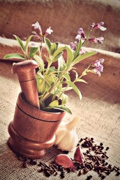 Sage is an excellent herb to keep around the house. It has many health… Sage Benefits, Health Benefits, Medical Miracles, Spices And Herbs, Korn, Natural Healing, Detox, Planter Pots, Nature
