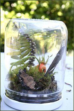 Gotta make a terrarium after a nature walk with my little boy.  :)
