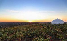 No dérbi da Luz camarotes vão ter Vinhos da Cidade Europeia do Vinho 2015