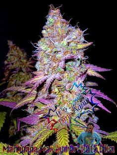 Weed Online Supplier offers very moderate prices CBD cannabis oil, THC cannabis oil, CBD:THC Cannabis oil and other meds Deliveries at https://www.weedonlinesupplier.com/ or text or call at +1 978 295-0424