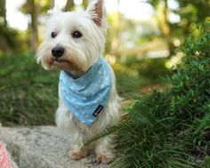 Cute handmade dog bandana made by Pebblina. Soft cotton material so it's nice and gentle on your dogs skin. Dog Facts, Online Pet Supplies, Dog Bandana, Bandanas, The Struts, Spring Time, Making Out, Best Dogs, Vip