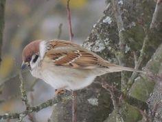 Precious Little Sparrow