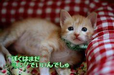 里親さんブログやっとやっと離乳期に突入です♪ - http://iyaiya.jp/cat/archives/75144