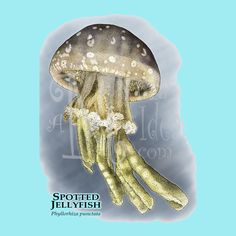 11-4-13 - Idea of the Day - #rh556- Spotted Jellyfish  on light blue tee is the Idea of the Day from our wildlife artist, Roger Hall.  To learn more about Roger Hall and his artwork visit his website at www.inkart.net