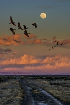 "ponderation: "" Flying by moonlight by David Soldano """