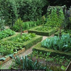 Boxed edged potager