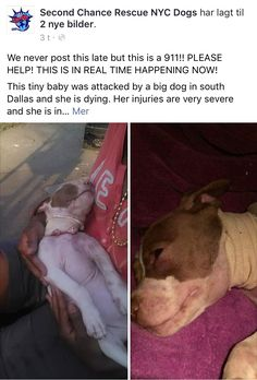 7/29/16 911 EMERGENCY PLEASE SHARE AND TRY TO HELP!! JELLYBEAN IS DYING! /ij https://m.facebook.com/story.php?story_fbid=974906209285101&id=268612969914432&__tn__=%2As