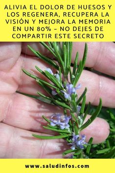 Salud Natural Dolores Healthy Tips Diabetes Natural Remedies Vegetarian Medicine Health Fitness Healing Herbs Healing Herbs, Medicinal Herbs, Herbal Tinctures, Herbalism, Turmeric Uses, Lose Weight, Weight Loss, Healthy Tips, Skin Care Tips