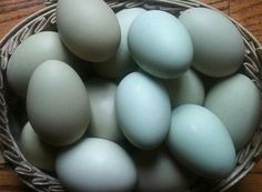 Farm fresh eggs from The Riggs Family  Ameraucana chickens