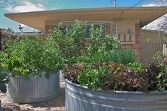 More repurposed stock tanks - this time for raised vegetable gardening.