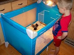 Post pics of your brooders! That looks like it might actually work, Related Post Brahma chicken – Wikipedia, the free encyclo. Chicken Brooder Box, Chicken Pen, Chicken Chick, Backyard Chicken Coops, Chickens Backyard, Chicken Coup, Keeping Chickens, Raising Chickens, Duck Coop