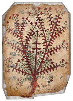 Rasiyun Plant from the Khawass Al-Ashjar (de Materia Medica), Iran, 13th century CE