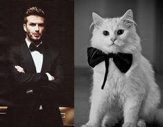 David Beckham vs Cat in Bow Tie, via Des Hommes et des Chatons.