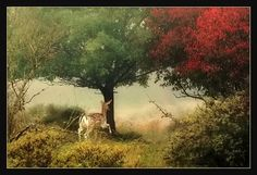 On a misty morning.. by Joke Hulst