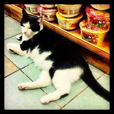 Mish-Mish the bodega cat fiercely guards the ramen.