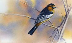 Joe Garcia Artworks Gallery - Bullocks Oriole Watercolor