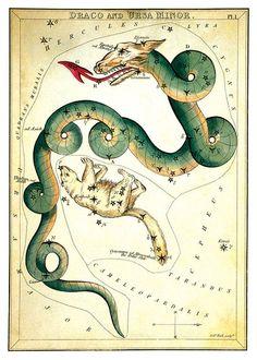 Antique Little Dipper Star Chart Dragon Bear Poster