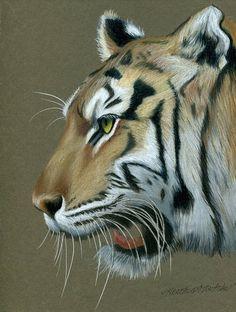 Tiger Fan de Heather A. Mitchell Lápiz de colores ~ 9 x 7