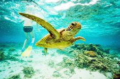 Great Barrier Reef, Australia.