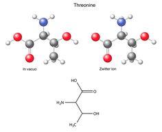 """Threonin Threonin gehört zu den essentiellen Aminosäuren und muss mit der Nahrung aufgenommen werden. Threonin ist eine polare Aminosäure und die Hydroxygruppe kann, ebenso wie beim Serin, phosphoryliert werden. Als solche Verbindung spielt es eine wichtige Rolle in enzymatischen Prozessen im Körper. Interessant ist die Tatsache, das die """"Anti-Frost""""-Proteine bei Fischen ausschließlich aus Alanin und …"""