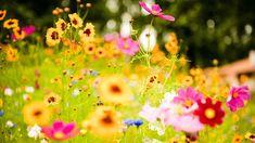 flower-meadow-hd-wallpapers.