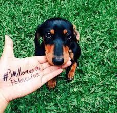 3 millones de polinesios con kler polinesia foto de:camii