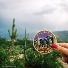 11 Beautiful Things to Do in Saguaro National Park.