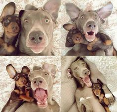 Who Said Dogs Cant Take Selfies