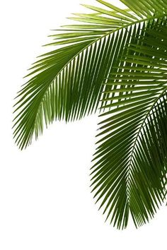 tropical palm leaves mural - Google Search