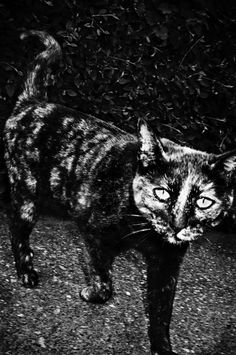 Swedish photographer Anders Petersen was elected Photographer of the Year at the Rencontres d'Arles in 2003 Photography Workshops, Book Photography, White Photography, My Photo Book, Photo Books, Collections Photography, Famous Photographers, Contemporary Photography, Crazy Cat Lady