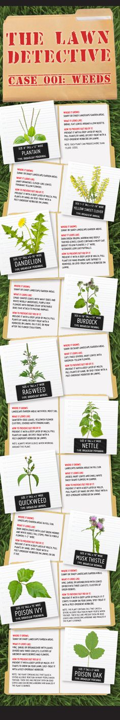 Solve your lawn's problems with helpful tips on how to prevent and get rid of broadleaf weeds from the Lawn Detective. #weeds #lawn #garden