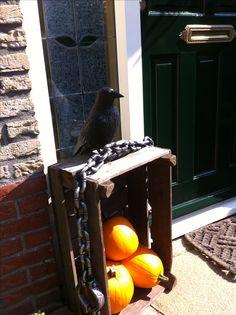 Herfst/ Halloween voordeur