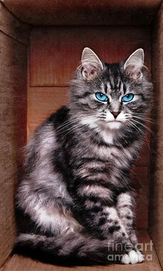 Look at those eyes! Gorgeous Kitty!!!!