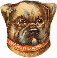Similar to the collared Colburn's Mustard Owl found here , this is what looks like a boxer dog. I've done some repairs and brightening, and. Matchbox Art, Vintage Dog, Vintage Clip, Dog Illustration, Cute Dogs And Puppies, Boxer Dogs, Pretty Cats, Vintage Pictures, Dog Love