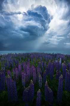 Incoming storm over photogenic invasive weeds, New Zealand {OC} ig: - Nature/Landscape Pictures Photography Projects, Outdoor Photography, Landscape Photography, Nature Photography, Travel Photography, Flower Photography, Photography Tips, Storm Photography, Summer Photography