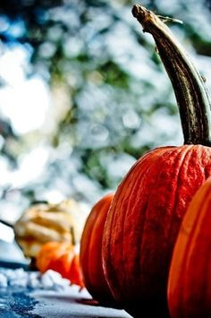 That time again. Autumn Day, Autumn Trees, I Fall, Autumn Leaves, Fall Baby, Pumpkin Carving, Pumpkin Spice, Happy Fall Y'all, Fall Harvest