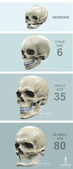 Nas Cart N Bone Nose Anatomy Inner Nose Diagram Parts Of External