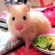 I want one...until it poops or pees then you can have it back, universe!  Sooooo cute!  Whisker kisses!!!