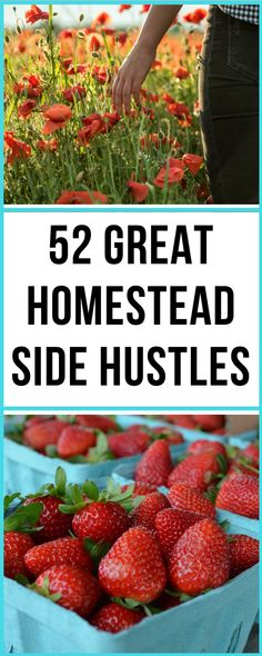 SO MANY unique ideas here for really making some cash from home, even without much land