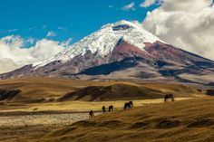 Unmissable things to do in Ecuador; exciting adventures, exotic wildlife, fascinating cultures and phenomenal scenery